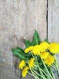 Helle gelbe L?wenzahnblumen auf h?lzernem Hintergrund, Hintergrund lizenzfreie stockbilder