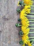 Helle gelbe L?wenzahnblumen auf h?lzernem Hintergrund, Hintergrund lizenzfreies stockbild