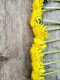 Helle gelbe L?wenzahnblumen auf h?lzernem Hintergrund, Hintergrund stockfotos