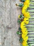 Helle gelbe L?wenzahnblumen auf h?lzernem Hintergrund, Hintergrund lizenzfreies stockfoto