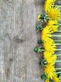 Helle gelbe L?wenzahnblumen auf h?lzernem Hintergrund, Hintergrund stockfoto