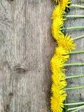 Helle gelbe L?wenzahnblumen auf h?lzernem Hintergrund, Hintergrund lizenzfreie stockfotografie