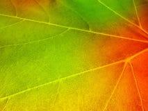 Helle gelbe, orange, rote, goldene Farben der Ahornblätter auf Baumzweig, backlit durch die Sonne Lizenzfreie Stockfotos