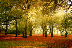 helle Herbstfarben des Waldes lizenzfreies stockfoto