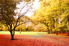 Helle Herbstlandschaft stockfoto