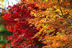 Helle Herbstniederlassungen Stockfoto