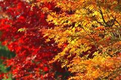 Helle Herbstniederlassungen Lizenzfreie Stockbilder