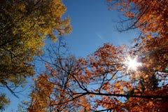 Helle Herbstzeit Lizenzfreie Stockfotos