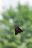 Helle hochrote Underwing-Motte, die hinter Fenster vor Baum sitzt Lizenzfreies Stockfoto