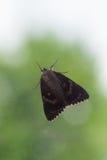 Helle hochrote Underwing-Motte, die hinter Fenster vor Baum sitzt Stockfoto
