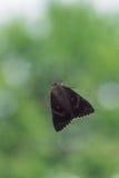 Helle hochrote Underwing-Motte, die hinter Fenster vor Baum sitzt Stockbilder