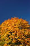 Helle Lacke des Herbstes Lizenzfreie Stockbilder