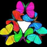 Helle mischende Schmetterlinge Lizenzfreie Stockfotos
