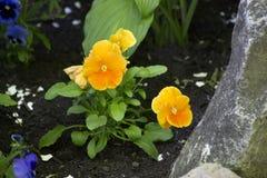 Helle mutige gelb-orangee Blumen Stockfotos
