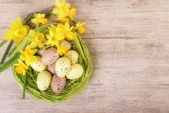 Helle Narzisse blüht mit dem Strohnest, das mit bunten Pastell-Ostereiern gefüllt wird Draufsicht, Textraum Lizenzfreie Stockbilder