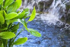 Helle nasse Grünpflanzen mit Wasserfall auf dem Hintergrund Lizenzfreie Stockfotos