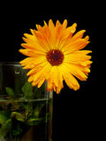 Helle orange Blume Stockbilder