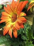 Helle orange Blume Stockfoto