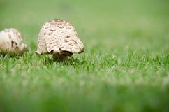 Helle Pilze Stockbilder