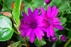 Helle purpurrote Blume mit grünem Laub lizenzfreie stockfotografie