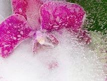 Helle purpurrote Orchideenblume Stockfotografie