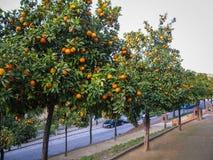 Helle reife Orangen auf Straßen von Jerez de la Frontera Lizenzfreies Stockfoto