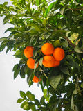 Helle reife Orangen auf Straßen von Jerez de la Frontera Stockfotografie