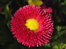 Helle rosa blühende Blume Stockbild