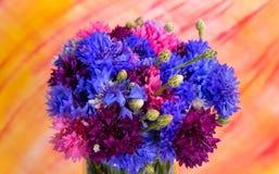 Helle rosa-blaue Kornblumen auf Hintergrund Stockbild