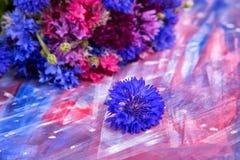 Helle rosa-blaue Kornblumen auf Hintergrund Lizenzfreie Stockbilder