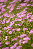 Helle rosa Blumen Stockfotografie