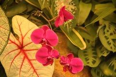HELLE ROSA ORCHIDEE IN EINEM TREIBHAUS lizenzfreie stockfotos