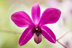 Helle rosa Orchideenblume im Garten stockfotos
