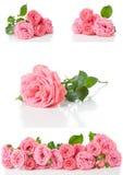 Helle rosa Rosen, Collage, lokalisiert lizenzfreie stockfotos