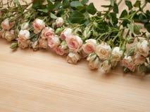 Helle rosa Sprayrosen auf hölzernem Hintergrund Stockfotos