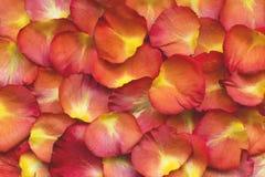 Helle rosafarbene Blumenblätter für den Hintergrund Stockfoto