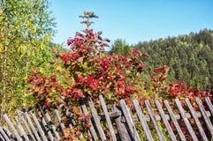 Helle rote Beeren Lizenzfreies Stockfoto