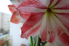 Helle rote Blüte lizenzfreie stockbilder