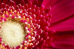 Helle rote Blume im Garten lizenzfreies stockbild