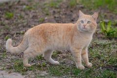 Helle rote Katze mit Türkis mustert für einen Weg O Lizenzfreies Stockbild