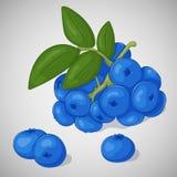 Helle saftige Blaubeere auf grauem Hintergrund Süßes köstliches für Ihr Design in der Karikaturart Auch im corel abgehobenen Betr Lizenzfreie Stockfotografie