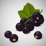 Helle saftige Schwarze Johannisbeere auf grauem Hintergrund Süßes köstliches für Ihr Design in der Karikaturart Auch im corel abg Stockbild