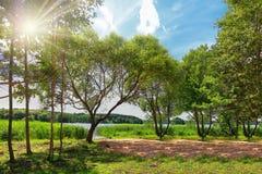 Helle Sommerlandschaft der grünen Natur auf See am sonnigen Tag Helle Strahlen der Sonne durch grüne Blätter von Bäumen Stockfotos