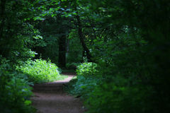Helle Sonne, die auf Pfad im Wald scheint Lizenzfreie Stockfotografie