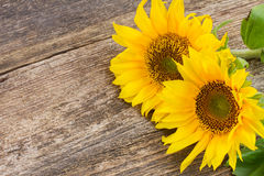 Helle Sonnenblume Lizenzfreie Stockfotos