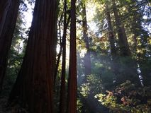 Helle Strahlen im Wald lizenzfreie stockbilder