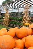 Helle und bunte große Kürbise, Topfpflanzen und cornstalks an der Kindertagesstätte lizenzfreie stockfotos