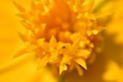 Helle und lebhafte Ringelblume lizenzfreies stockbild