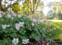 Helle weiße Blumen Stockfotografie