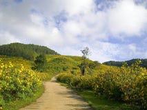 Helle Weise im Maxican-Sonnenblumengarten Stockfoto